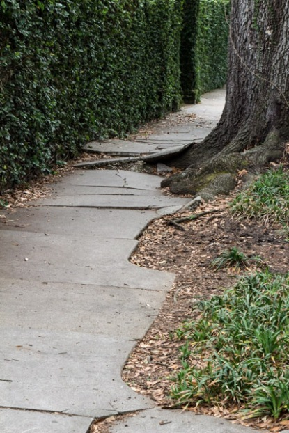 Trees Great Sidewalks Not